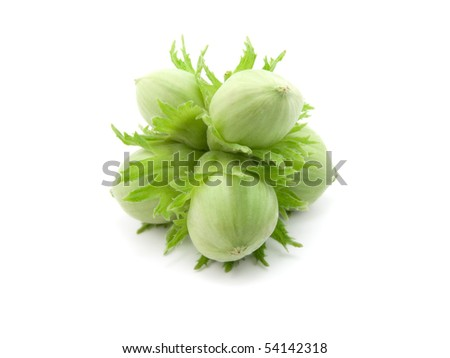 Group of fruits of a green nut tree on a white background. - stock photo