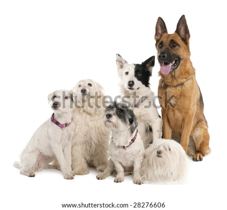 group of german shepherd, border collie and some crossbreed in front of a white background