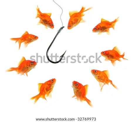 group of goldfish around empty hook  isolated on white - stock photo