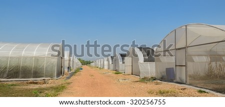 Group of greenhouses on a summer day