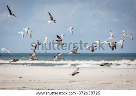 Group of Gulls and Terns in Flight