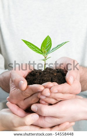 Group of hands holding a fresh green sprout, symbol of growing business, environmental conservation and bank savings. - stock photo