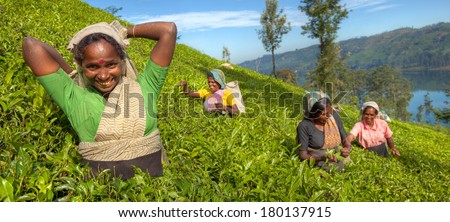 Group of Happy Tea Pickers in Hills of Sri Lanka - stock photo