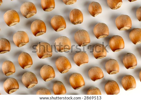 Group of hazelnuts on a white background - stock photo