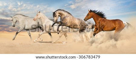 Group of horse run gallop - stock photo
