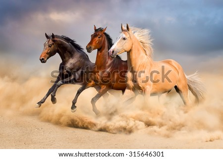 Group of horse run gallop in sand - stock photo