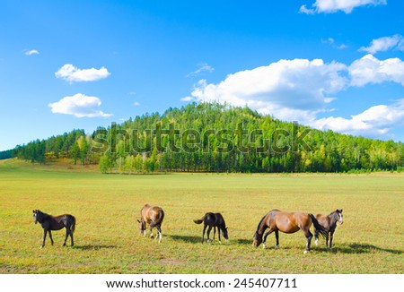group of horses graze at green pasture - stock photo