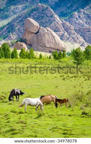 group of horses grazing at green pasture - stock photo