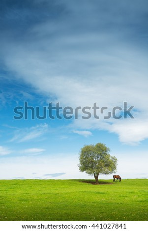 Group of horses in the summer pasture - stock photo