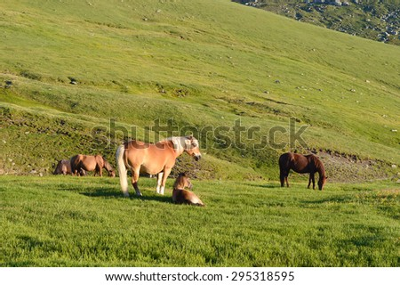 Group of horses, mare with foal on green mountain pasture - stock photo