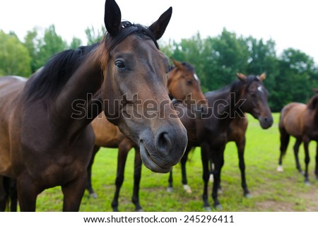 Group of horses outside horse ranch in summer  - stock photo