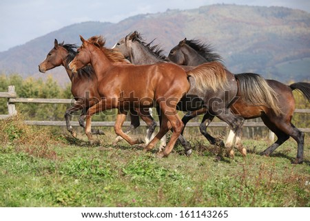 Group of horses running together on autumn pasturage - stock photo