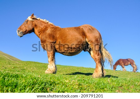 Group of horses tt green pasture, Pyrenees - stock photo