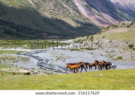 Group of horses with colts pasturing in mountains - stock photo