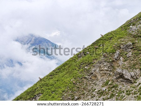 Group of ibexes at alpine meadow among clouds - stock photo