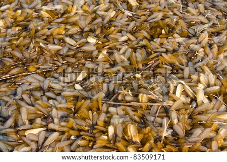 Group of insect termite with wing - stock photo
