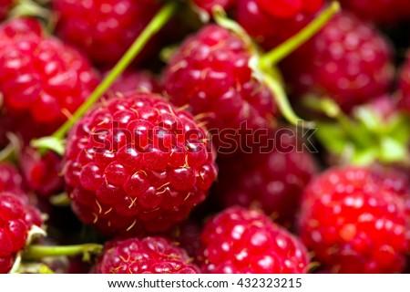 group of juicy raspberries close up shot - stock photo