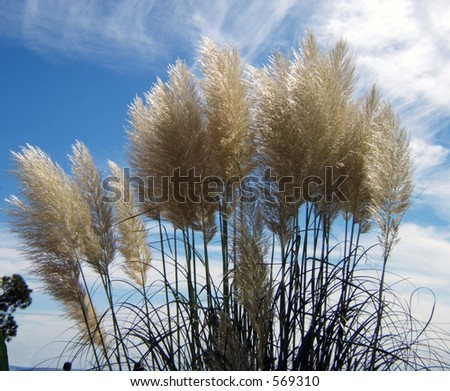 group of junks in a  marsh - stock photo