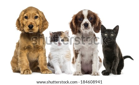 Group of kittens and dogs - stock photo
