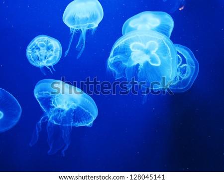 Group of light blue jellyfish - stock photo