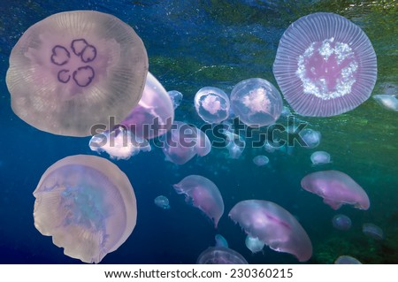 Group of light blue jellyfish. - stock photo