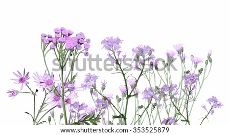 group of lilac flowers isolated on white background