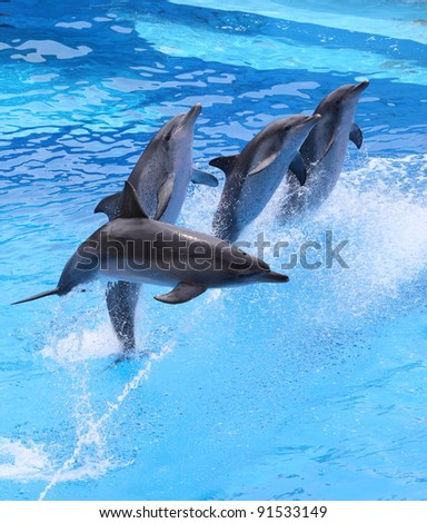 group of little dolphins jumping out of water