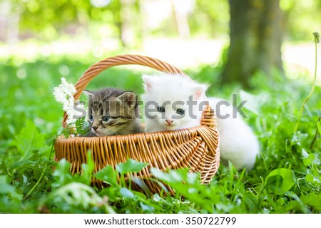 group of little kitten in a basket on the grass, - stock photo