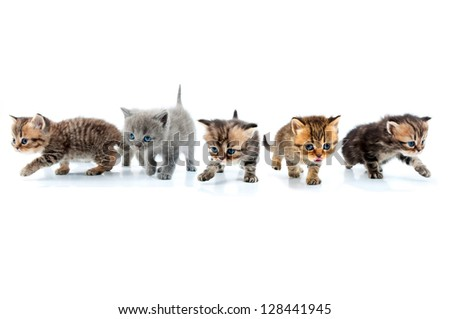 Group of little kittens walking towards together. Studio shot. Isolated over whitÃ?Â?? background. - stock photo