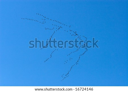 Group of migrating birds flying on blue sky
