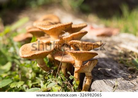Group of mushrooms - stock photo