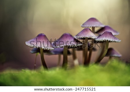 Group of Mushrooms growing in the Autumn Forest - stock photo