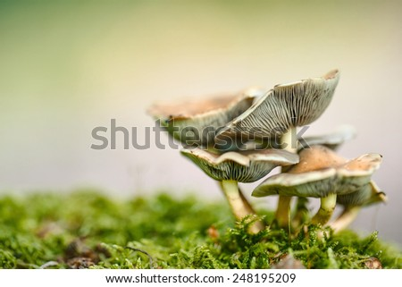 Group of Mushrooms growing in the Autumn Forest