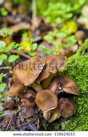 Group of mushrooms in forrest