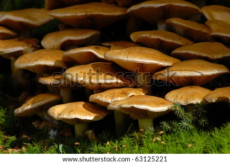 Group of mushrooms in the forest - stock photo