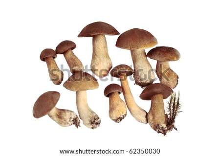 Group of Mushrooms. Isolated on white.