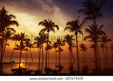 Group of palm thees on sunset background