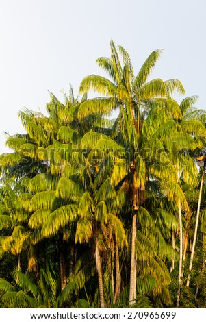 Group of palm trees - stock photo