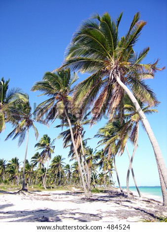 Group of palm trees with perfect blue sky