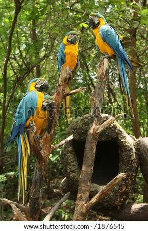 group of parrots in the forest