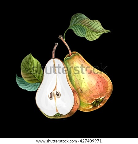 Group of pears with leaves. Watercolors drawing. - stock photo