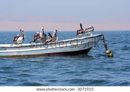 Group of pelicans standing on an old fisherboat. Taken at the Islas Ballestas in the south of Peru.