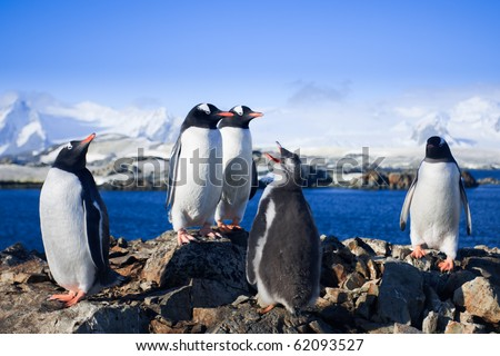 Group of penguins having fun on a background of mountains - stock photo