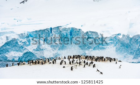 Group of penguins, huge quantity, all together in Neko Harbour, Antarctica - stock photo