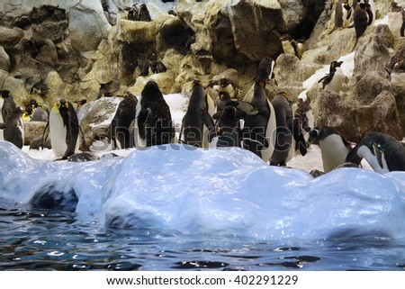 Group of penguins on the ice, rocks behind.  - stock photo