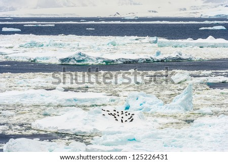 Group of penguins over the ice in Antarctica. Antarctic region of the Southern Hemisphere, almost entirely south of the Antarctic Circle, and is surrounded by the Southern Ocean. - stock photo