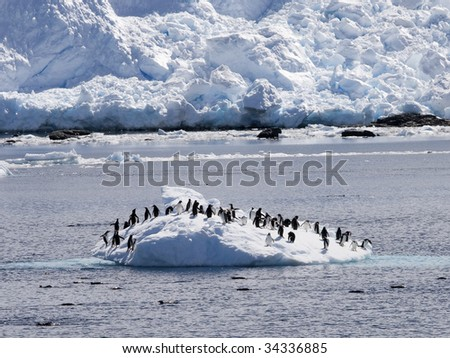 group of penguins recreating on an iceberg - stock photo
