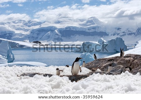 group of penguins with a blue iceberg bay - stock photo