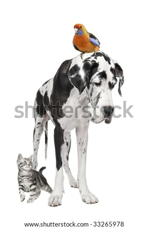 Group of pets : dog, bird, cat in front of white background - stock photo