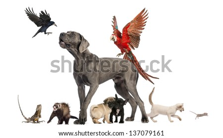 Group of pets - Dog, cat, bird, reptile, rabbit, isolated on white - stock photo